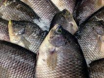 Свежие рыбы в дисплее на рынке Стоковое Изображение RF