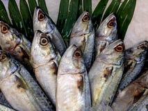 Свежие рыбы в дисплее на рынке Стоковые Изображения