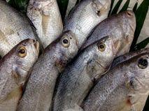Свежие рыбы в дисплее на рынке Стоковое Фото