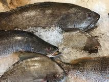 свежие рыбы в плите льда Стоковые Фотографии RF