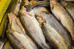 Свежие рыбы в различных размерах кладя на таблицу Стоковые Фото