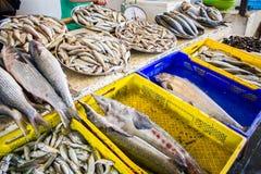 Свежие рыбы в различных размерах кладя на таблицу Стоковые Изображения