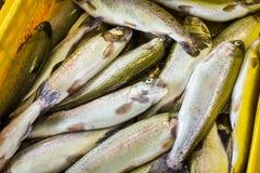 Свежие рыбы в различных размерах кладя на таблицу Стоковое Изображение