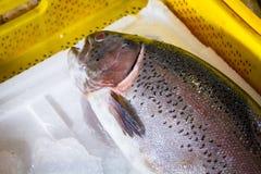 Свежие рыбы в различных размерах кладя на таблицу Стоковое фото RF