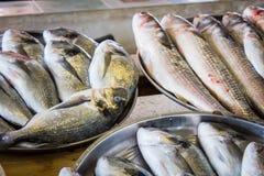 Свежие рыбы в различных размерах кладя на таблицу Стоковые Изображения RF