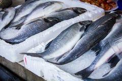 Свежие рыбы в различных размерах кладя на таблицу Стоковая Фотография
