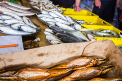 Свежие рыбы в различных размерах кладя на таблицу Стоковые Фотографии RF
