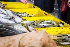 Свежие рыбы в различных размерах кладя на таблицу Стоковое Фото