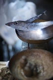 Свежие рыбы задвижки утра Стоковое Изображение