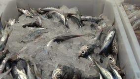 Свежие рыбы и calmar в рынке в коробке сток-видео