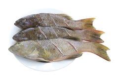 Свежие рыбы морского окуня (морской окунь леопарда) на блюде для ингридиента Стоковая Фотография RF