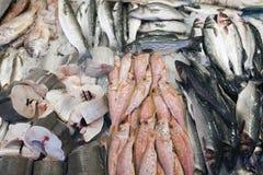 Свежие рыбы на дисплее на marketstall в Нидерланд Стоковая Фотография RF