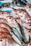 Свежие рыбы на магазине рыб Стоковые Фотографии RF