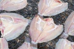 Свежие рыбы на пластичной сети под солнцем освещают для делают высушенных рыб Стоковая Фотография RF