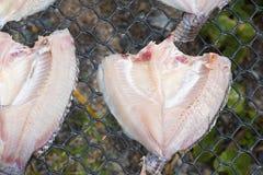 Свежие рыбы на пластичной сети под солнцем освещают для делают высушенных рыб Стоковая Фотография