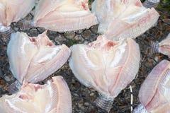 Свежие рыбы на пластичной сети под солнцем освещают для делают высушенных рыб Стоковое Изображение