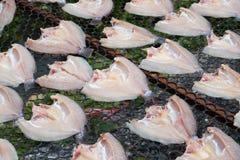 Свежие рыбы на пластичной сети под солнцем освещают для делают высушенных рыб Стоковые Изображения