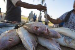 Свежие рыбы на рыбном базаре на пляже Стоковая Фотография