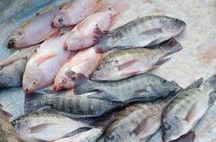 Свежие рыбы на рынке Стоковое фото RF