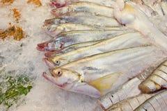 Свежие рыбы на льде на рынке в Таиланде Стоковая Фотография RF