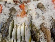 Свежие рыбы на льде на рынке Таиланде Стоковые Фотографии RF