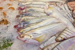 Свежие рыбы на льде на рынке Таиланде Стоковое Изображение RF