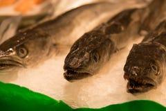 Свежие рыбы на льде от рынка стоковая фотография