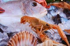 Свежие рыбы различных видов и цветов Стоковое Фото