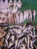 Свежие рыбы, рыбный базар Beyoglu Galatsaray Стамбул Турция Стоковые Изображения