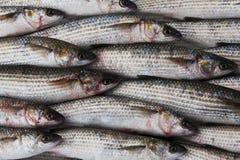 Свежие рыбы серого mullet на рынке Стоковая Фотография