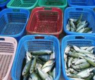 Свежие рыбы Стоковое фото RF