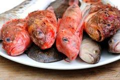 Свежие рыбы Стоковые Фото