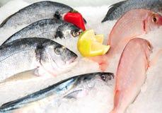 Свежие рыбы Стоковая Фотография RF