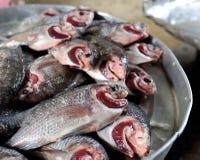 Свежие рыбы Стоковая Фотография