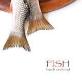 Свежие рыбы. стоковые фото