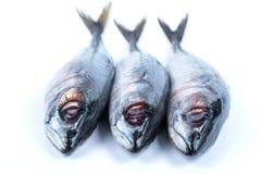 Свежие рыбы saba Стоковое фото RF