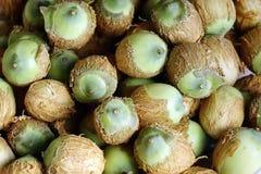 Свежие семена лотоса в июле стоковые фотографии rf