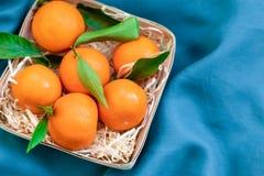 Свежие скомплектованные мандарины на голубой предпосылке стоковое изображение