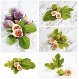 Свежие смоквы с листьями, коллажем Стоковая Фотография
