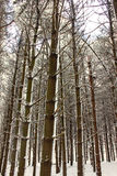свежие снежности illinois Стоковая Фотография RF