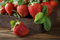 Свежие сочные клубники с листьями Предпосылка клубники еда принципиальной схемы здоровая Свежие органические ягоды Стоковое Фото