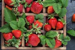 Свежие сочные клубники с листьями Предпосылка клубники еда принципиальной схемы здоровая Свежие органические ягоды Стоковая Фотография