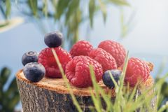 Свежие сочные ягоды леса поленик и голубик лежат дальше стоковые фотографии rf