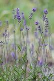 Свежие специя и травы в саде Стоковая Фотография RF