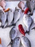 Свежие среднеземноморские рыбы на рынке в льде 2 Стоковые Изображения