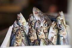 Свежие сырцовые красный люциан и скумбрия удят в рынке Сицилийский уличный рынок Мальтийсный рынок рыбы крупного плана свежие Стоковое фото RF