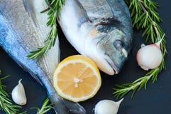 Свежие сырцовые рыбы dorado с розмариновым маслом, чесноком и лимоном на черноте Стоковое фото RF