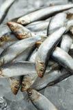 Свежие сырцовые шпротины, органические рыбы на льде стоковое фото