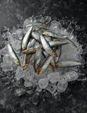 Свежие сырцовые шпротины, органические рыбы на льде стоковая фотография