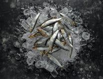 Свежие сырцовые шпротины, органические рыбы на льде стоковое фото rf